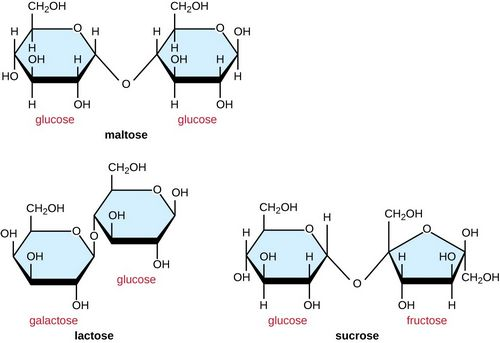 What Is Sucrose - The Basic Building Block of Glucose